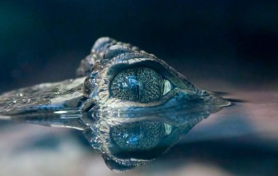 5 Krokodil-Filme, die man gesehen haben muss