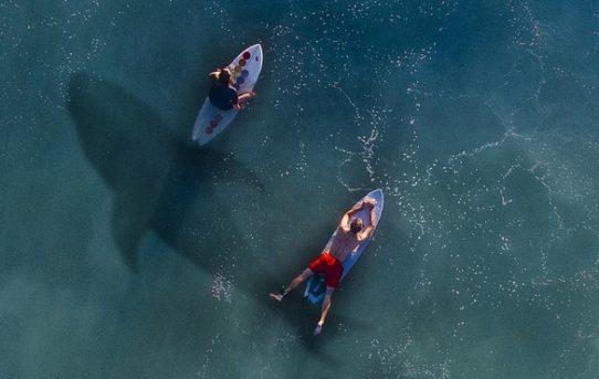 5 Hai-Filme, die man gesehen haben muss