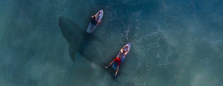 Der Schatten eines Hais unter zwei Surfern.
