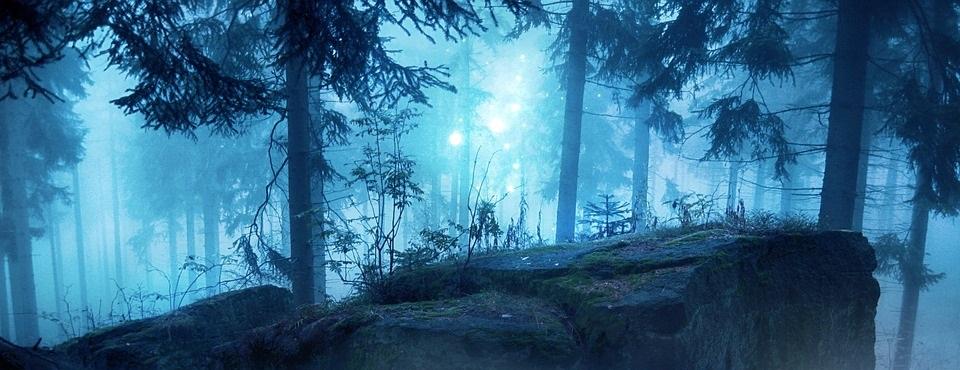 Mysteriöser Wald im Nebel