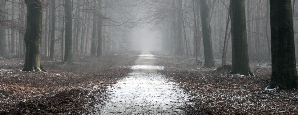 Ein Waldweg mit leichtem Frost und vielen Herbtsblättern.