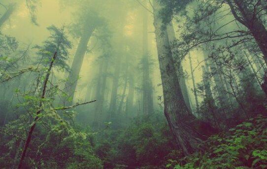 5 Horrorfilme im Wald, die man gesehen haben muss