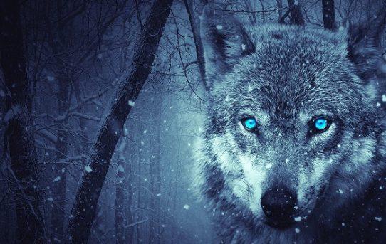 Der Werwolf (II)