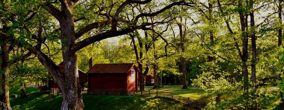 Rote Hütte auf einer Wiese unter einem Baum.